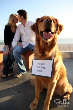 fun ways to include your dog in your wedding, dog in engagement photo, beach wedding, wedding, wedding planning, pets, dog, cat, dog pictures, dog wedding picture, cute wedding picture idea with pets, funny pet picture, animals in weddings