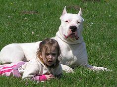 El Dogo Argentino puede ser perfecto para vivir con niños si se entrena correctamente