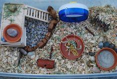 Hamster Habitat Home Cage Showcase Hamster Bin Cage, Gerbil Cages, Hamster Care, Hamster Stuff, Gerbil Toys, Hamster Supplies, Mouse Cage, Hamster Habitat, Syrian Hamster