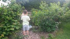 Wir sind sehr zufrieden mit dem Teichzaun-auch Kaufabwicklung, Kommunikation, Lieferung-alles super! Der Aufbau war sehr einfach. Der Zaun fügt sich unauffällig in den Garten ein und stellt auch für unseren 6-Jährigen eine sichere Barriere dar! Viele Grüße aus Osnabrück, Familie D.