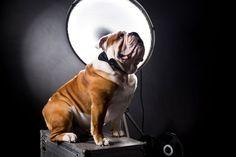 #brooklyn #brooklynmood #englishbulldog #bulldog #bulldoglove #pet #petstagram #petlover #lovedog #dog #doggram #dogstagram #doglove #doglover #friend #adorable #pic #pics