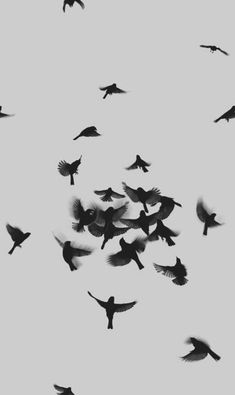 Birds in air, black and white