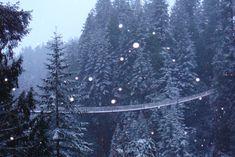 Capilano Suspension Bridge - Capturing Snowfall