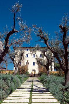 Beautiful - alley to L'Andana on the Tenuta la Badiola near Grosseto province , Tuscany region Italy