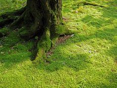 Mooooosss.... I love moss. Love, love, love it.