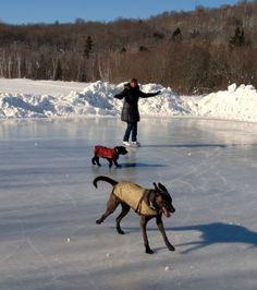 skating at deerhurst Huntsville Ontario, Dog Travel, Weekends Away, Skating, Dog Lovers, Places To Visit, Adventure, Pets, Winter