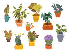 Plant Illustrations by ColoRita Plant Illustration, Planter Pots, Illustrations, Creative, Illustration, Illustrators, Drawings