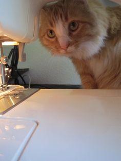 Kitty likes my sewing machine