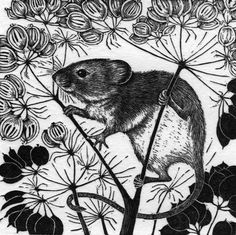 Harvest Mouse, wood engraving by Rosamund Fowler