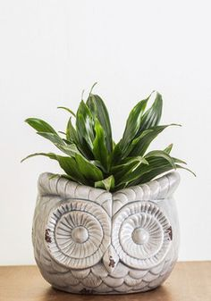 Flew and Far Between Planter. Its not every day you see an ceramic planter as wonderfully whimsical as this one! #grey #modcloth
