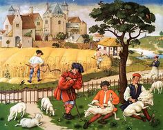 Reaping & sheep shearing, 15th c.  Image at the History Picture Library, great online source.