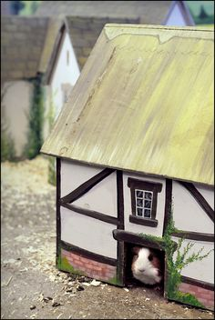 Guinea Pig village. May have to get a guinea pig just so I can build this village. LOL