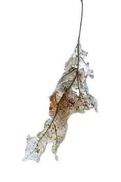 winter leaf (mary jo hoffman)