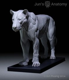 Jun's Anatomy Big Cats Anatomy models by Jun Huang — Kickstarter