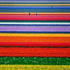 Courir à tort et à travers ces champs de couleurs... ça donne envie!!