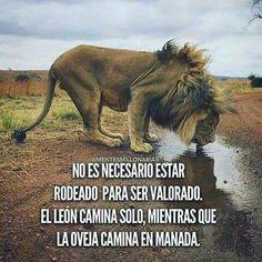No es necesario estar rodeado para ser valorado. El león camina solo, mientras que la oveja camina en manada.