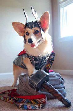 Thorgi 2: The Dog World