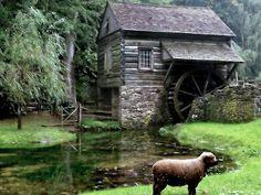 Tecnologia e Tecnica del costruire: Il mulino ad acqua, invenzione antica