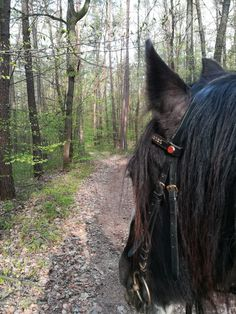 Gypsy Horse, Horses, Animals, Animales, Animaux, Animal, Animais, Horse