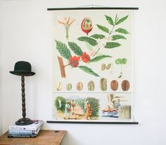 Vintage Pull Down Chart, Coffee Bean Plant,  Jung Koch Quentell on Etsy, $222.95