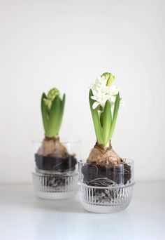 MALLING LIVING Bar Glass with hyacinths
