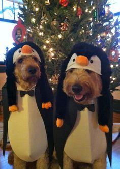 @Kathy Flanders-Your next animals need to be golden doodle penguins!