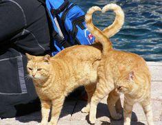 impactantes no, lo siguiente, vaya fotos y yo me voy por los gatos :-)
