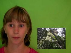 How to Use Greenscreen on Windows Movie Maker. This wikiHow teaches you how to add a fake background to a video via a green screen on a Windows computer. If you have Windows Movie Maker or older on a Windows 7 computer, you may be able. Windows Movie Maker, Video Fx, Diy Screen Printing, Flipped Classroom, Music Classroom, Teacher Education, Lessons For Kids, Science For Kids, Stop Motion