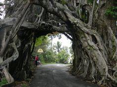 Tie jossain vuorilla meni puun läpi