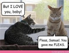 You gave me fleas.... @ f-j-p.com