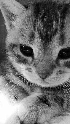 Little kitty looks so serious!