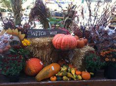 Fall decor - broom corn, pumpkins, gourds, hay bales