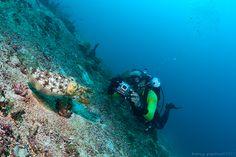 Critters Scuba Diving