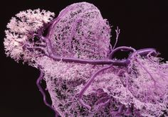 Organ Replication Takes a Leap with #3DPrintedBloodVessels