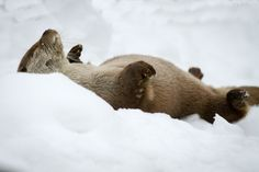 Otter doing his apres ski thing....