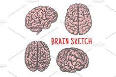 Human brain organ vector sketch icon by Vector Tradition SM on @creativemarket