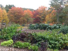 www.themeditativegardener.blogspot.com The Meditative Gardener: The Fall Garden