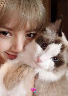 """Happy birthday to Lisa's cat, Luca! Kim Jennie, K Pop, Spa Day Gifts, Sick, Romantic Picnics, Arte Disney, Kim Jisoo, Cool Themes, Blackpink And Bts"