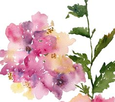 Hydrangea Flower Watercolor,