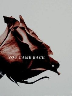 You came back Beast to Belle Aesthetic Belle Aesthetic, Disney Aesthetic, Princess Aesthetic, Character Aesthetic, Aesthetic Photo, Writing Inspiration, Character Inspiration, These Broken Stars, The Wicked The Divine