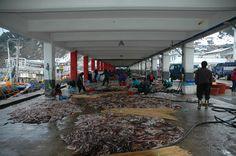 울룽도 2006년 1월 1일 오징어 경매 개장 직전