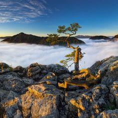 arbre-surplombe-vide-nuage