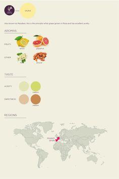 Learn About Wine: Viura / Macabeo / Macabeu Grape