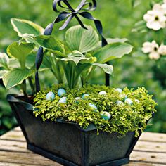 DIY Plant An Easter Basket