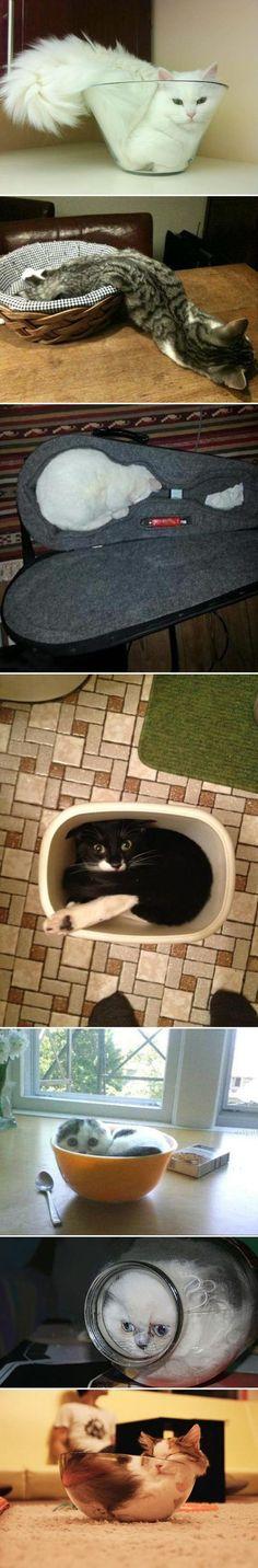 Los gatos mas flexibles