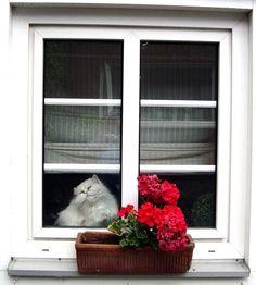 ❧ Cat in the window ❧