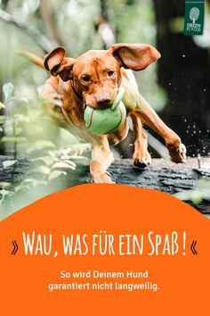 Wenn Deinem Hund und Dir die Decke auf den Kopf fällt, heißt es: Raus an die Luft! Wenn keine tierischen Spielkameraden in Sicht sind, gibt es tolle Möglichkeiten, selbst kreativ zu werden. Hier findest Du Tipps, wie Du aus der Gassirunde eine Abenteuer-Tour für Deinen Hund machen kannst! Dexter, Green, Movie Posters, Movies, Dog Care, Dog Food, Dexter Cattle, Films, Film Poster