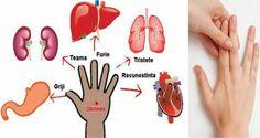 Un articol de Razvan  Japonezii spun ca fiecare deget al mainii este conectat la doua organe ale corpului si au un tratament de vindecare care dureaza doar 5 minute.  Jin Shin Jytsu este o parte a medicinei alternative, care se bazeaza pe degetele de la maini, iar sarcina sa este ca prin punctele …