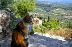 Cat near the convent of Pantanassas in Mystras, Greece. More travel pictures with cats at http://travelling-cats.blogspot.com