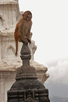 Monkey perched on top of shrine at Harati Devi, otherwise known as 'Monkey Temple' in Kathmandu, Nepal